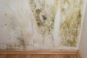 Mold on walls could indicate a broken sewer line.