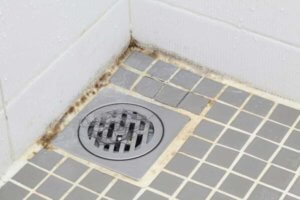 mold can be a source of the bad smell in your shower