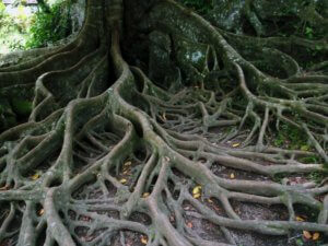 Tree roots can invade sewer lines and cause a number of problems