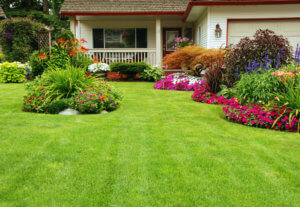 Patches of grass that are greener than the rest of the lawn may indicate a broken sewer line.